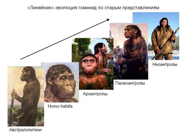 Доклад про эволюцию человека 1110