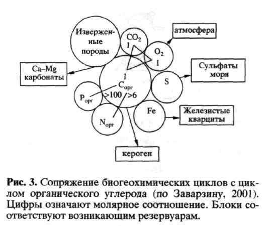Схема биогеохимическая